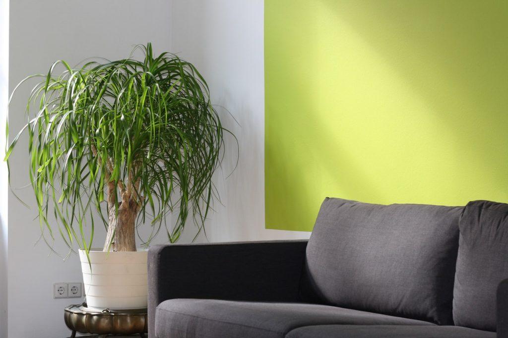 Canapé gris en tissus dans un salon, plante verte